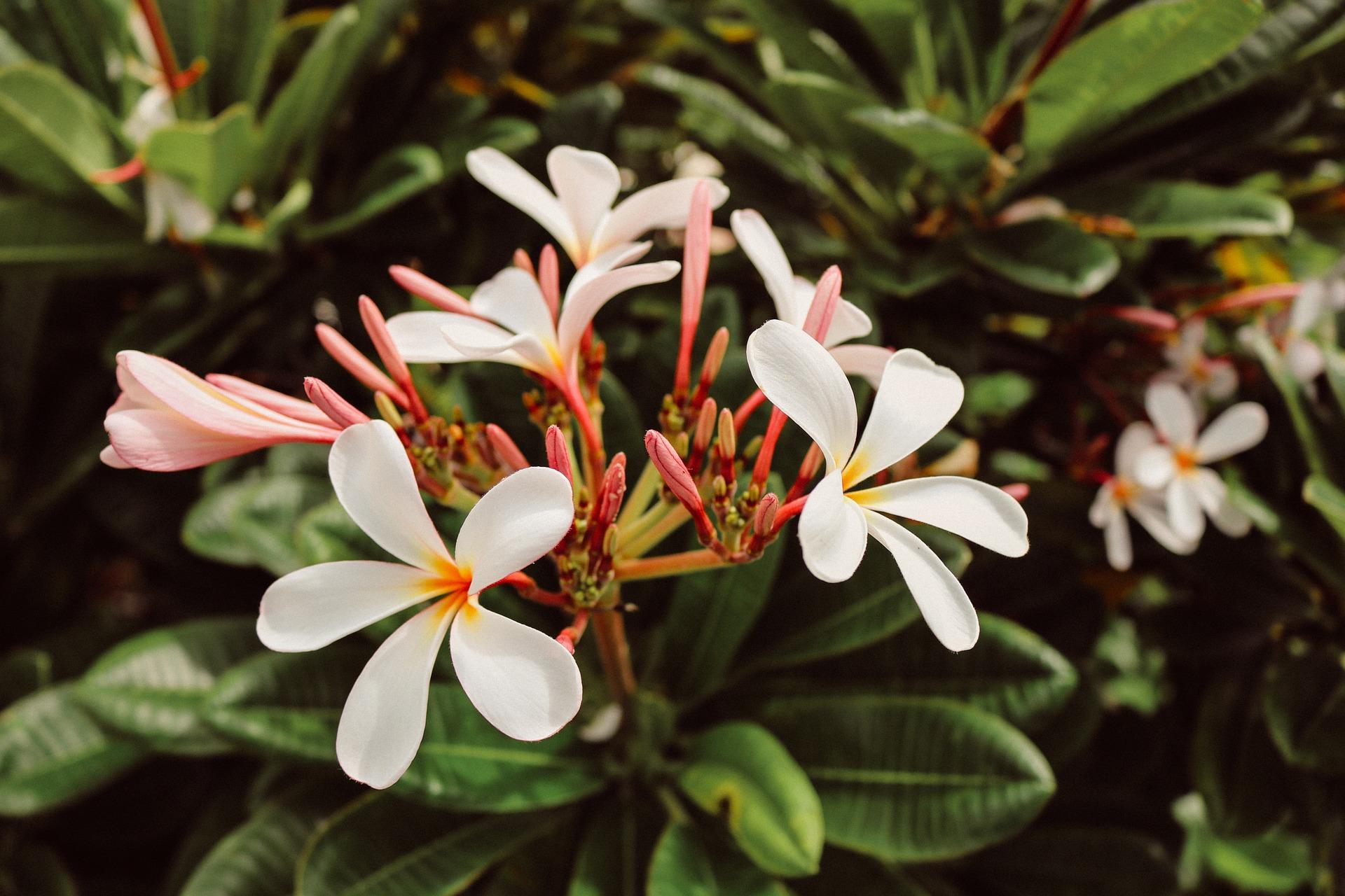 flowers-940244_1920